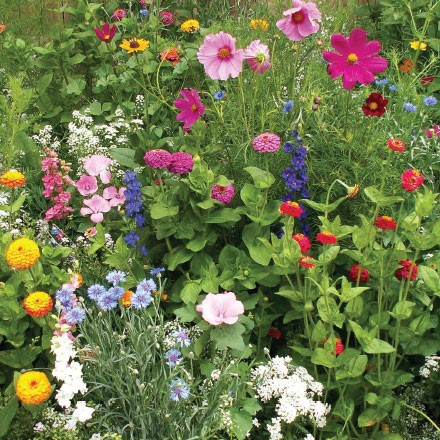 English Cottage Garden Seed Mat 4004