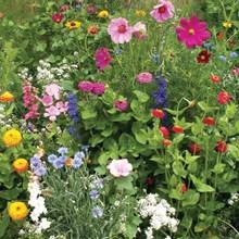 English Cottage Garden Seed Mat 4004