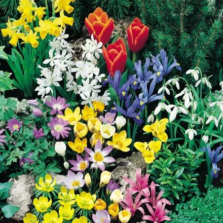Rock Garden Collection 4734