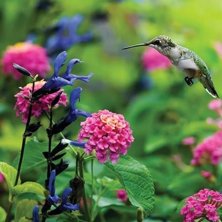 Hummingbird Garden 4065