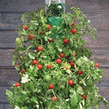 Hanging Cherry Tomato Kit 4647