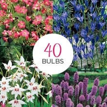All-Season Garden Collection 4047