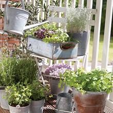 Healthy Herb Garden 4067