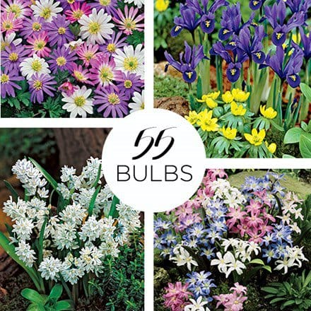 Spring Rock Garden Collection – 55 bulbs 4000