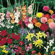 Garden Spectacular Collection 4075
