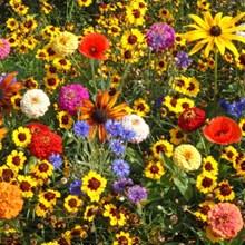 Easy Care Children's Garden Seed Mat 4054