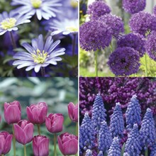Got The Blues Garden – 40 bulbs 4040